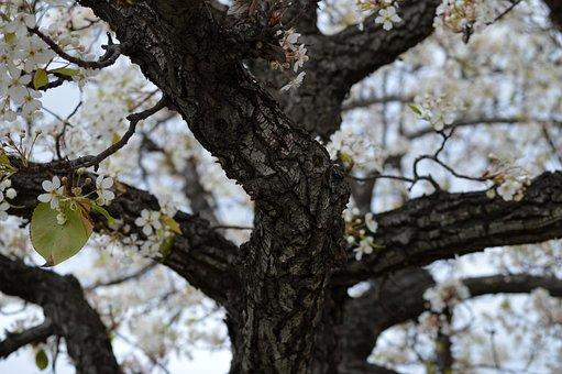 Tree, Trunk, Flowers
