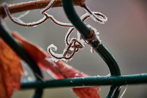 Outbreaks, Frozen, Frost, Branch, Ice
