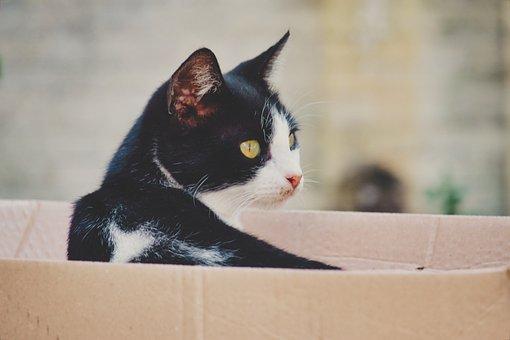 Cat, Mammal, Animal, Cats, Feline, Tiger, Fur, Predator
