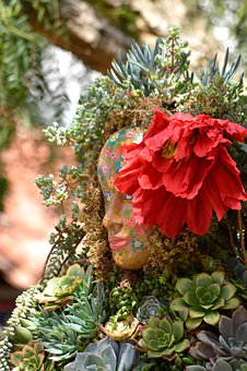 Succulents, Planter, Garden, Decoration, Growing, Face