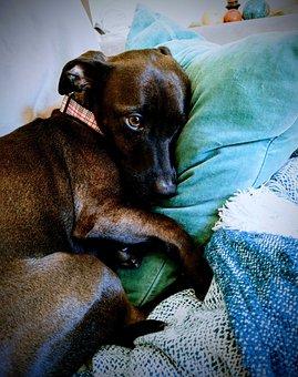 Dog, Black Dog, Sweet, Gentle, Pet Dog
