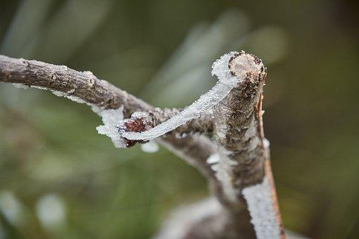 Outbreaks, Frozen, Frost, Branch, Ice