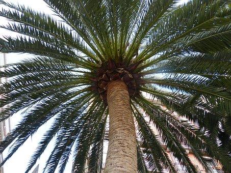 Palm, Beach, Vacations, Sea, Island