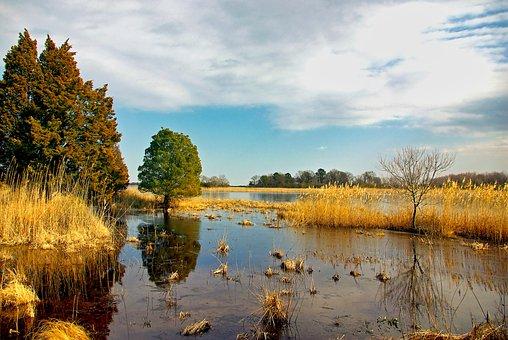 Wetland, Nature, Swamp, Moor, Landscape, Swampy