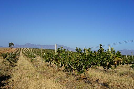 Wine, Africa, Bush, Dust, South Africa, Landscape