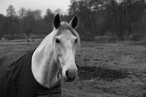 Horse, Animal, Mammal, Pasture, Close Up