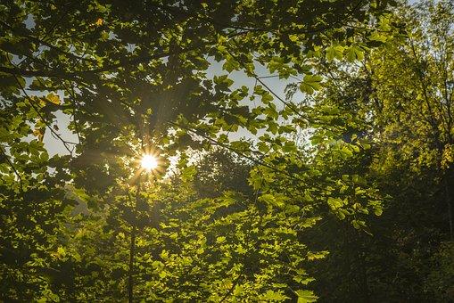 Sun, Leaves, Forest, Autumn, Nature, Tree, Fall Foliage