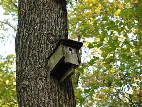 Nesting Box, Bird Feeder, Forest, Tree, Tribe, Leaves