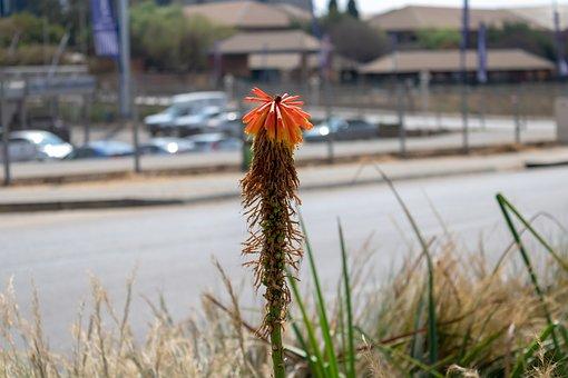 Orange Flower, Flower, Orange, Spring
