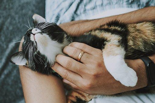 Pet Care, Care, Cat, Kitten, Cute, Furry, Playful
