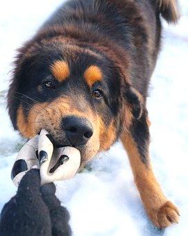 Dog, Animal, Game, Cute, Portrait, Fun, Winter, Snow