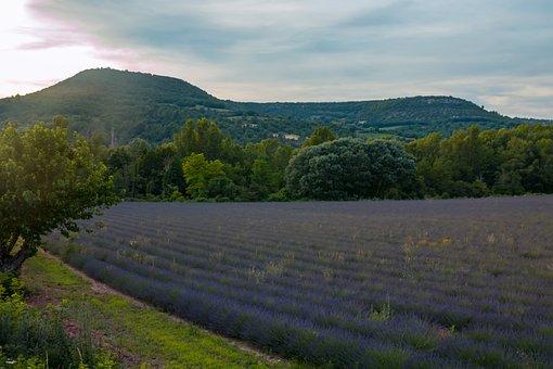 Lavender, Sunset, Purple, Nature, Landscape, Summer
