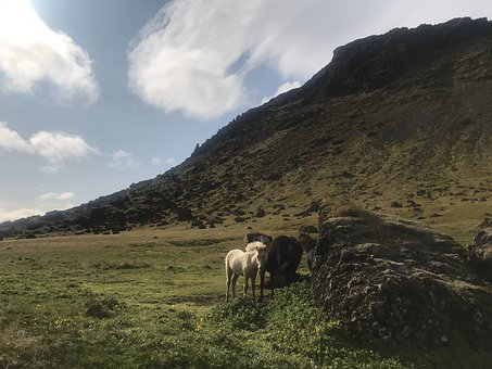 Horses, Pony, Wild, Mountains, Country, Rural, Foal