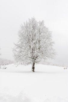 Snow, Winter, Frozen, Nature, Landscape
