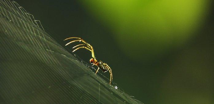 Macro, Insect, Spider, Web, Armenia
