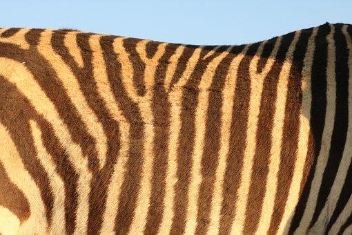 Zebra, Pattern, Zebra Pattern, Fur, Stripes, Africa