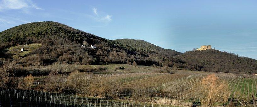 Landscape, Hambach Castle, Palatinate, Wine, Vineyards