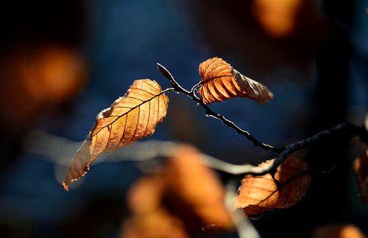 Autumn, Leaves, Branch, Light, Coloring, Golden Brown