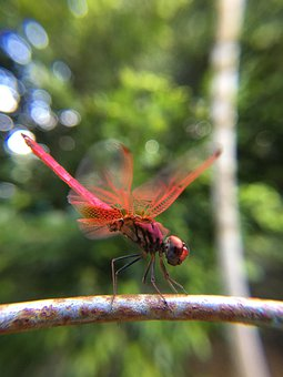 Dragonfly, Fly, In, Nature, Insect, Wing, Bug