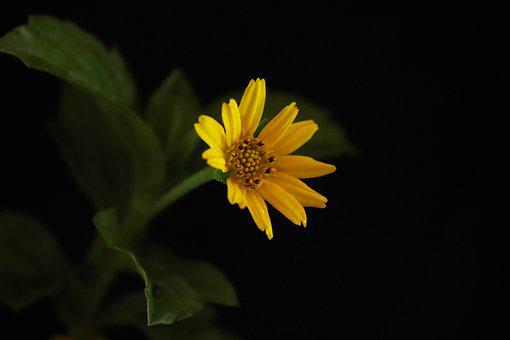 Flowers, Yellow, Leaves, Dark