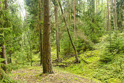 Forest, Tree, Nature, Forests, Ecology, Summer