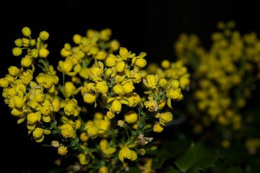 Yellow, Flower, From, Garden