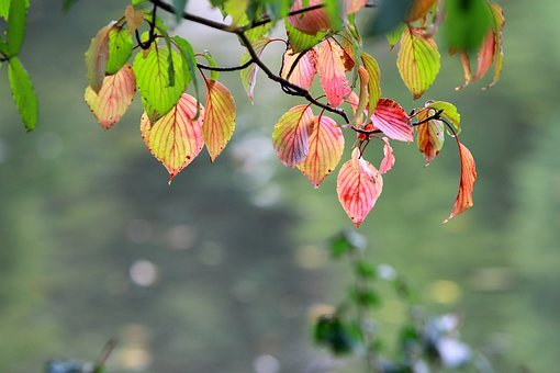 Autumn, Gorgeous, Leaf, Background