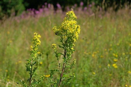 Summer, Heat, Love, Beauty, Landscape, Field, Meadow