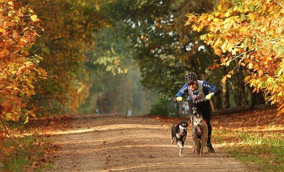 Husky, Sled Dog, Dog, Landscape, Race
