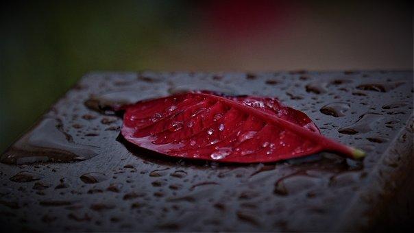Park Bench, Leaf, Dark, Gloomy, Red, Brown