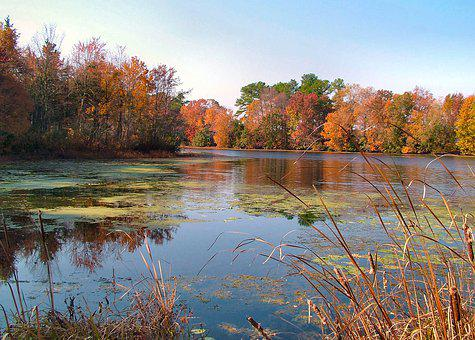 Fall, Leaves, Pond, Colorful, Nature, Forest, Landscape