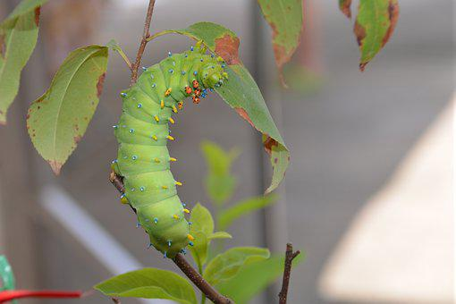 Larvae, Moth, Nature, Caterpillar, Harmless