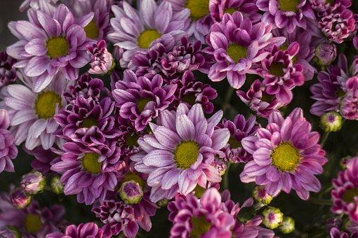Lavender, Purple, Nature, Summer, Herbs, Garden, Plant