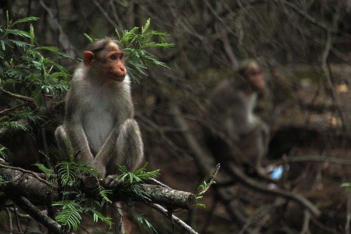 Monkey, Forest, Nature, Jungle, Animal