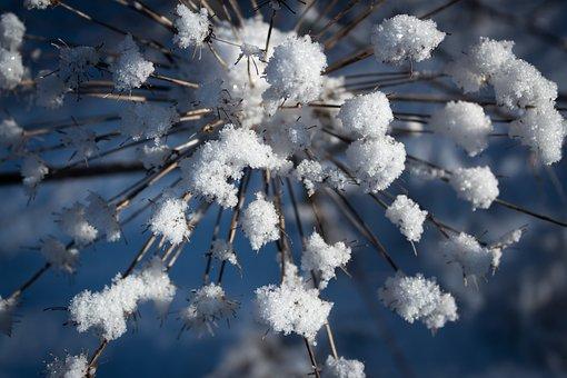 Yarrow, Snow, Macro, Graphically, Nature, Ice, White