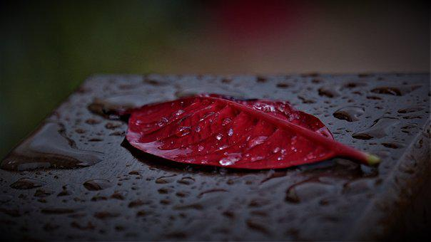 Park Bench, Leaf, Dark, Gloomy, Red