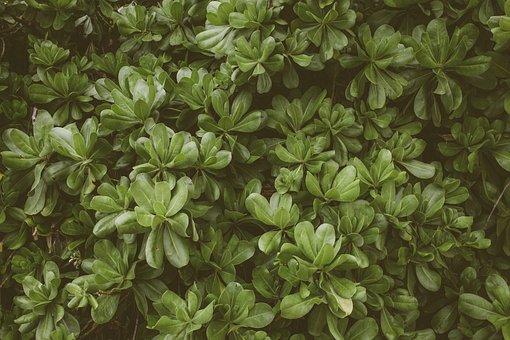 Plant, Greenery, Botany, Lush, Green