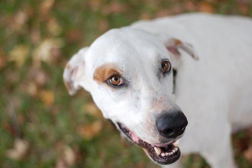 Dog, Puppy, Eyes, Leaves, Cute, Pet