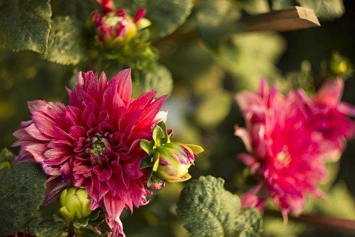 Red, Love, Garden, Bloom, Roses, Flowers, Blossom