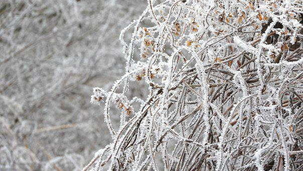 Frost, Weed, Plants, Icing, Rime