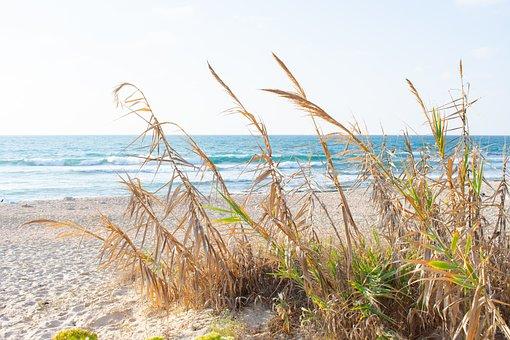 Coast, Spikes, Sea, Wind, Sand, Seaside, Summer, Nature
