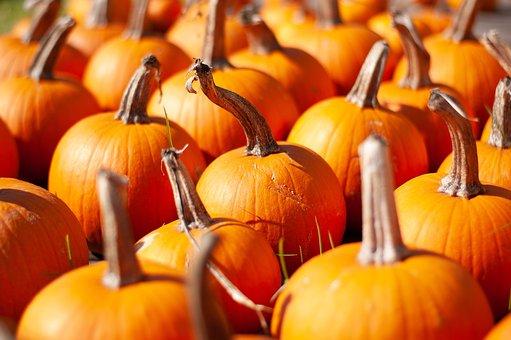 Pumpkins, Stem, Pumpkin Patch, Autumn, Fall, Harvest