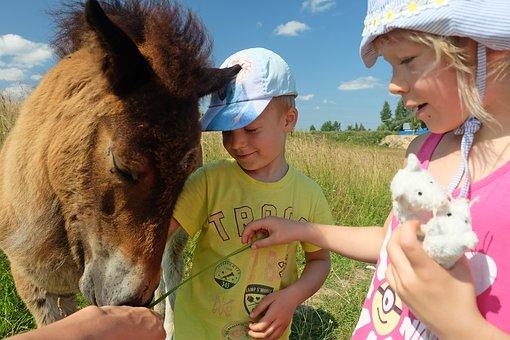 Summer, Heat, Love, Horse, Beauty, Landscape, Field