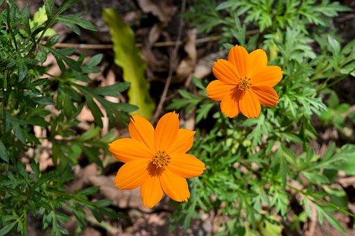 Orange, Nature, Garden, Summer