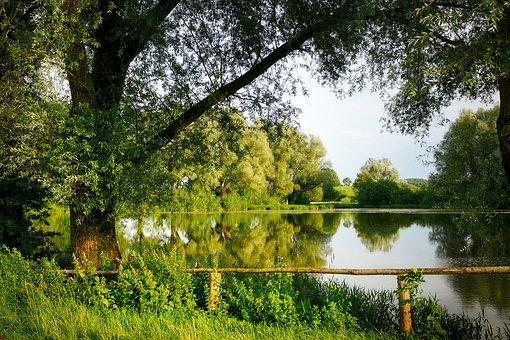 Lake, Pond, Tree, Railing, Wood