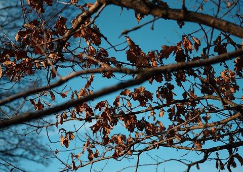 Tree, Winter, Nature, Trees