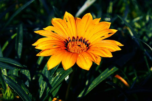 Flower, Yellow, Green, Sunflower, Nature, Blossom