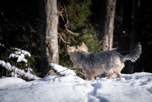 Dog, Out, Winter, Snow, Spout, Free
