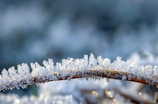 Eiskristalle, Frost, Frozen, Cold, Ice