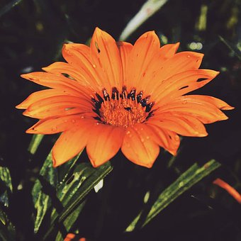 Flower, Green, Nature, Yellow, Colorful, Life, Summer